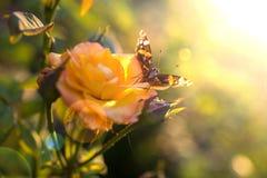 Fjäril på en ro Royaltyfri Fotografi