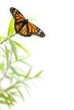 Fjäril på en växt som isoleras på vit, gränsbakgrund Arkivfoton