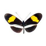 Fjäril på en vitbakgrund i kickdefinition arkivfoton