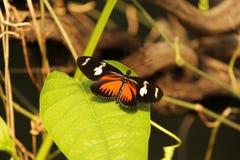 Fjäril på ett blad Fotografering för Bildbyråer