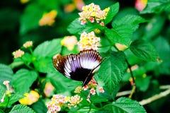 Fjäril på ett blad Royaltyfri Bild