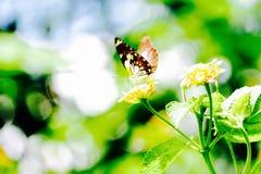 Fjäril på ett blad Royaltyfri Fotografi