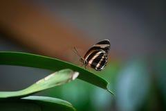 Fjäril på ett grässtrå royaltyfri fotografi