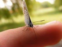 Fjäril på ett mänskligt finger Fotografering för Bildbyråer