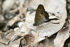 Fjäril på ett stupat blad Arkivfoto