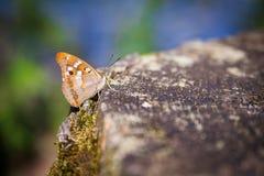 Fjäril på ett träd i trät en sommartid Arkivfoto