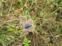 Fjäril på fältet Arkivfoto