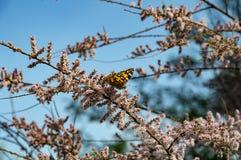 Fjäril på filialerna av en blomma buske arkivfoto