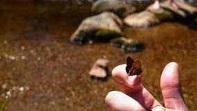 Fjäril på fingret Fotografering för Bildbyråer
