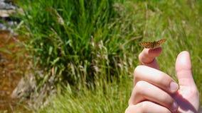 Fjäril på fingret Arkivfoto