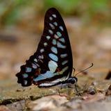 Fjäril på gräs Arkivbild