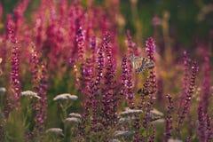 Fjäril på gräs Arkivfoton