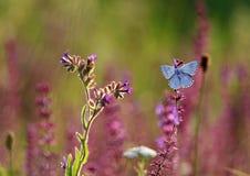 Fjäril på gräs Royaltyfri Fotografi
