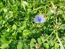 Fjäril på gräset arkivfoto