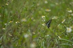 Fjäril på gräsplan royaltyfri bild