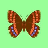 Fjäril på grön bakgrund Fotografering för Bildbyråer