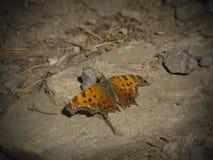 Fjäril på jordning Arkivfoton