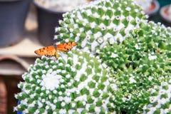 Fjäril på kaktuns Arkivfoton