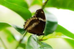 Fjäril på leafen Arkivfoto