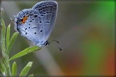 Fjäril på leafen Arkivbilder