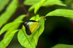 Fjäril på leafen Royaltyfria Foton