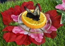 Fjäril på mandartne Arkivfoton