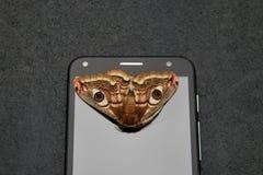 Fjäril på mobiltelefonskärmen royaltyfri foto
