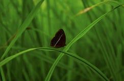 Fjäril på naturen Fotografering för Bildbyråer