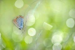 Fjäril på ny bakgrund arkivbilder