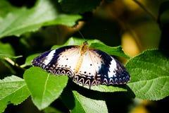 Fjäril på sidor i trädgården Royaltyfri Fotografi