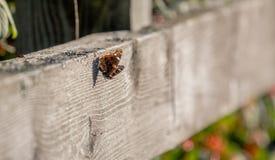 Fjäril på staket Royaltyfri Fotografi