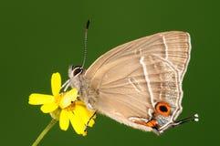 Fjäril på trä Arkivfoto