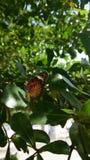 Fjäril på treen Arkivbild