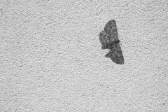 Fjäril på väggen Arkivbild