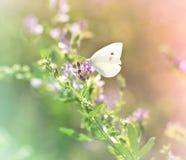 Fjäril på vildblomman Arkivbild