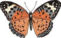 Fjäril på vit Arkivbild