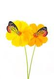 Fjäril på yellow&Orangeblomman Arkivfoto