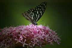 Fjäril & rosa färgblomma Arkivfoto