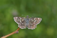 Fjäril som är utomhus- i vår Arkivfoton