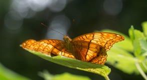 Fjäril som elegantly placerar på ett blad Fotografering för Bildbyråer