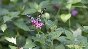 Fjäril som sätta sig på säsongsbetonad blom Arkivbild