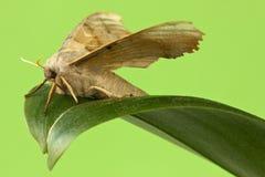 Fjäril som sitter på leafen Royaltyfri Foto