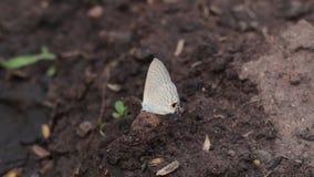 Fjäril som vilar på jord lager videofilmer
