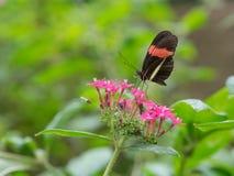 fjäril trädgårds- s sydliga thailand Arkivbild