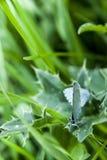 Fjäril två gör förälskelse på gräs arkivfoton