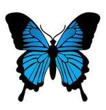 Fjäril. Vektorillustration Royaltyfri Fotografi