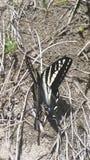 Fjäril vid floden Royaltyfri Foto