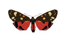 Fjäril - zygaena Arkivbilder