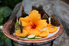 Fjärilar äter frukter i botaniska trädgården Montreal arkivfoto