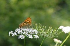 fjärilar Royaltyfria Foton